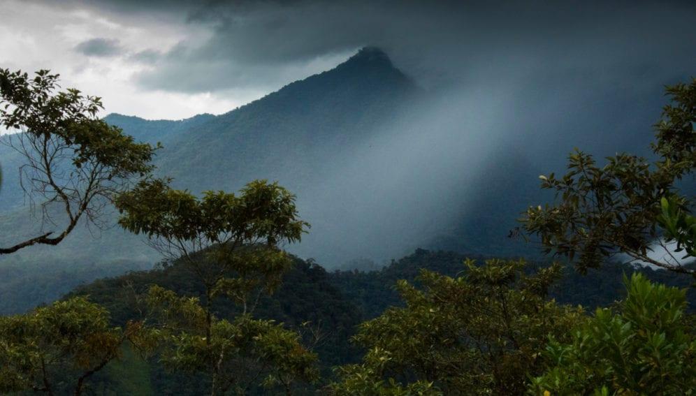 panel Amazonia1