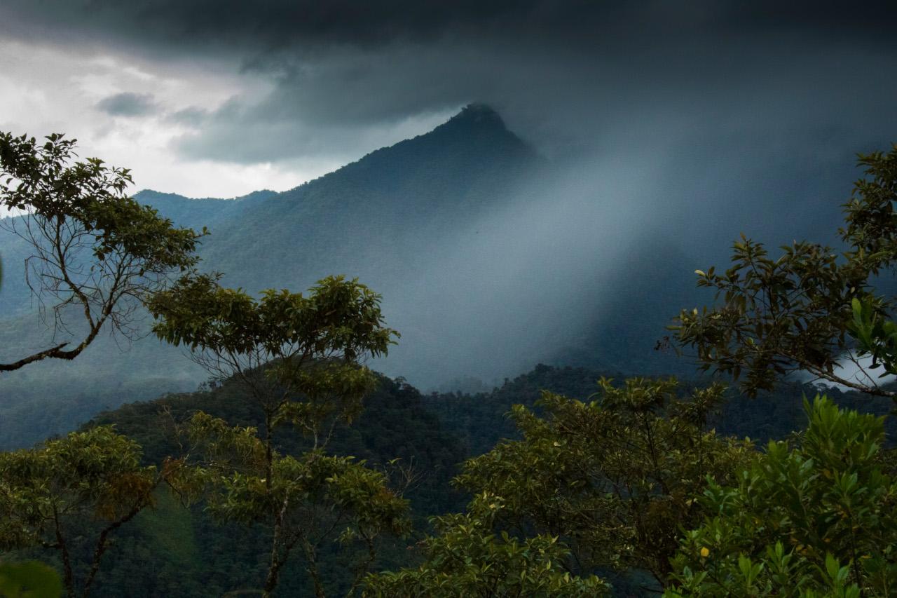 Expertos se unen en un panel para preservar la Amazonía