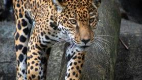 Pérdida de mamíferos pone en riesgo servicios de los ecosistemas