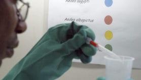 Nuevo examen de sangre para detectar zika aprobado en Brasil