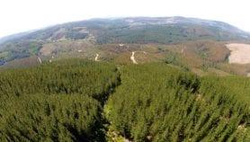 Incentivos a la forestación pueden perjudicar el ambiente
