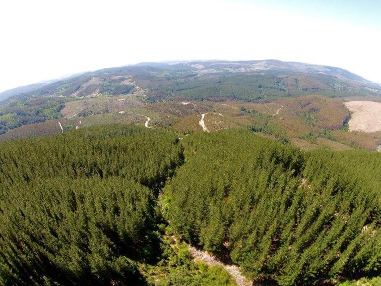 reforestacion Chile1