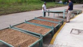 Insecticida ecológico protege cosechas en México