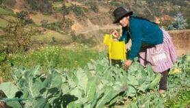 Perú ante encrucijada respecto a los transgénicos