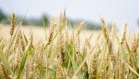 Seis medidas para mitigar las emisiones del sector agrícola