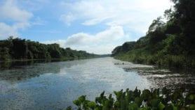 Peces invasores alteran dinámica de lagos tropicales en Alto Paraná