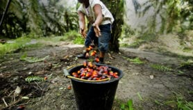 Science can keep palm oil industry sustainable