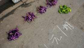 Philippine court lifts ban on GM eggplant, now what?