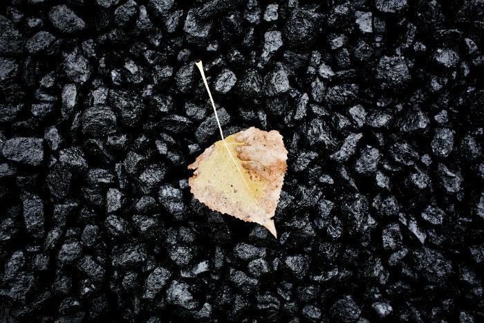 Coal and autumn leaves