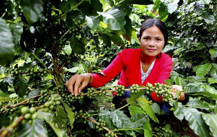 Coffee_G.M.B. Akash_Panos