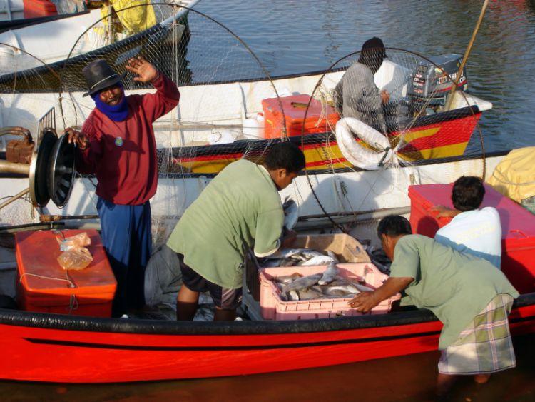 Fisheries in Terengganu