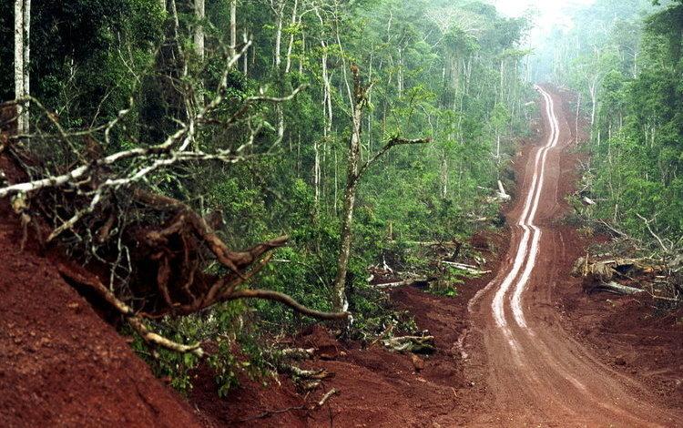 Logging Road_Sven Torfinn_Panos