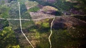 Malaysia baulks on oil palm maps
