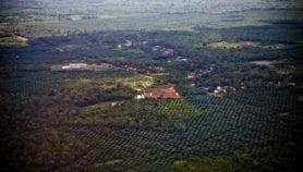 Palm oil watchdog levels up standards