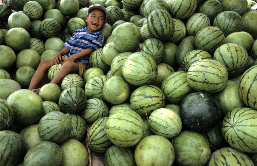 child amongst watermelons