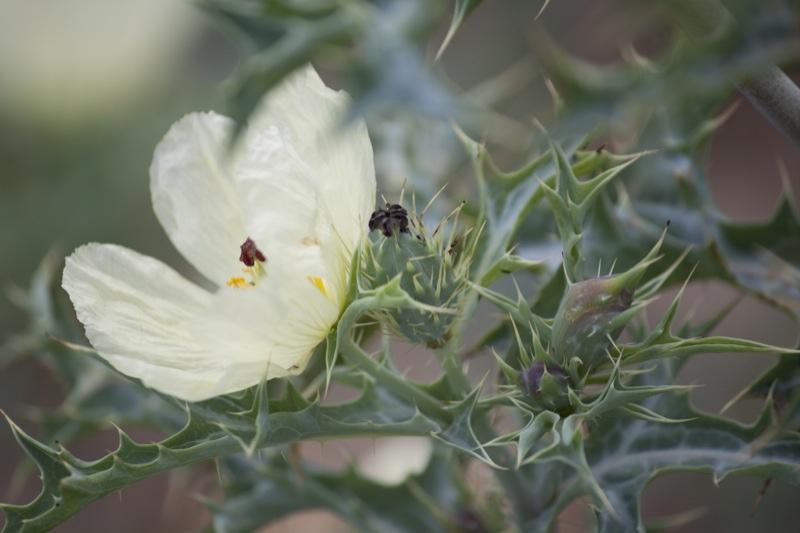 plant_flickr_biodiversity_international