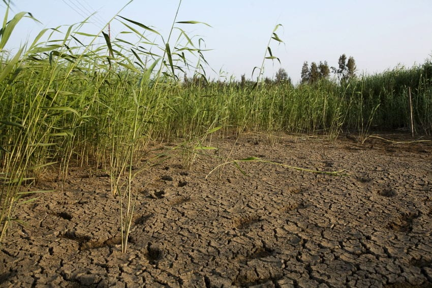 rice_drought_Jason_Larkin_Panos