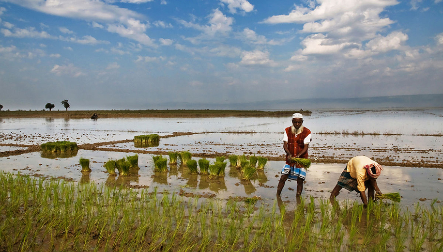 Bangladesh farm-main