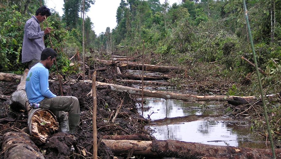 Borneo deforestation - main