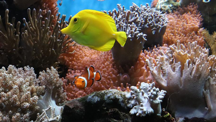 coral reefs - main