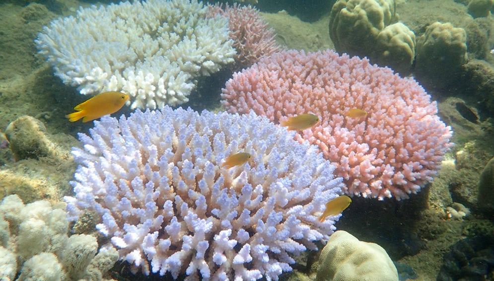 coral reef-main