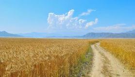 Increasing aridity threatens food security in Pakistan