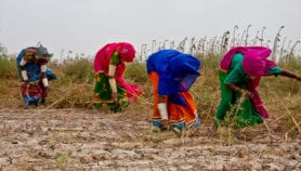 New deal for women farmers in Pakistan