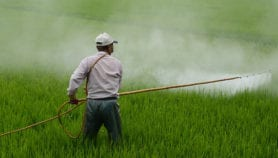 Poisoning cases mar India's bid to be a global pesticides hub