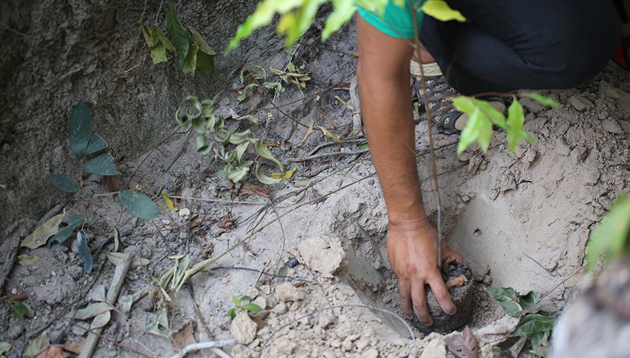 Tree planting - main