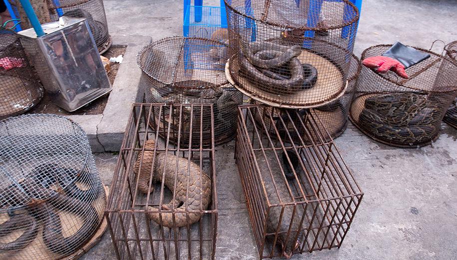 wild animal trade-main