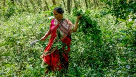 Formal forest management may cut community rights