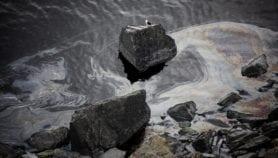 Eco-friendly nanomembrane removes oil spills