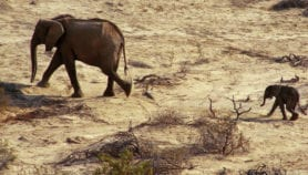 Horn of Africa faces drier weather