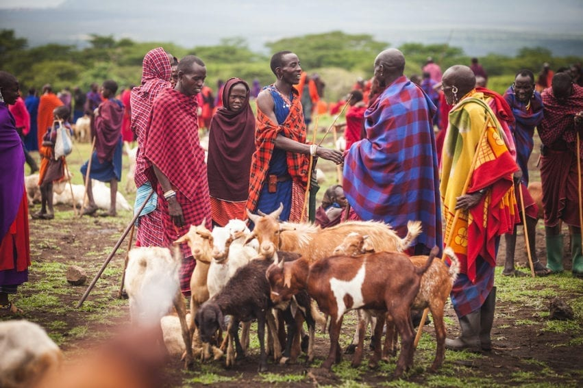 Livestock trading underpins Maasai culture. People travel long distances to trade at market. Disease outbreaks lower prices, damaging livelihoods and food security. Porous national borders and variations in disease control between health authorities mean diseases spread more easily