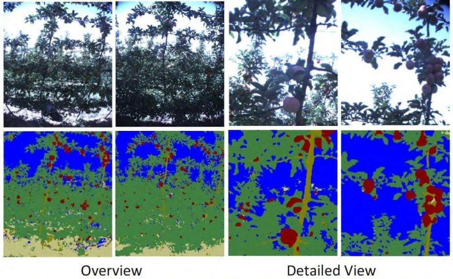 Once the robot knows where the tree is, researchers can then apply other machine learning algorithms for higher-level tasks. This includes detecting specific features on the tree - in this case the actual fruit. The robot is also able to detect and count flowers. Such accurate figures allow farmers to predict yields with great confidence