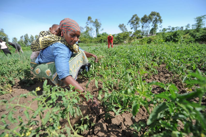 Smallholder farmer woman