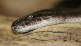 Snakes and folk tales meet science in disaster warning