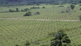 Huge potential of grazing land for biofuel surge