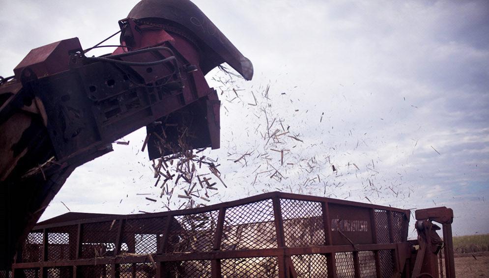 Brazil sugarcane cutting machine - MAIN