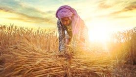 Debate: what role will technology play in the future of food security?