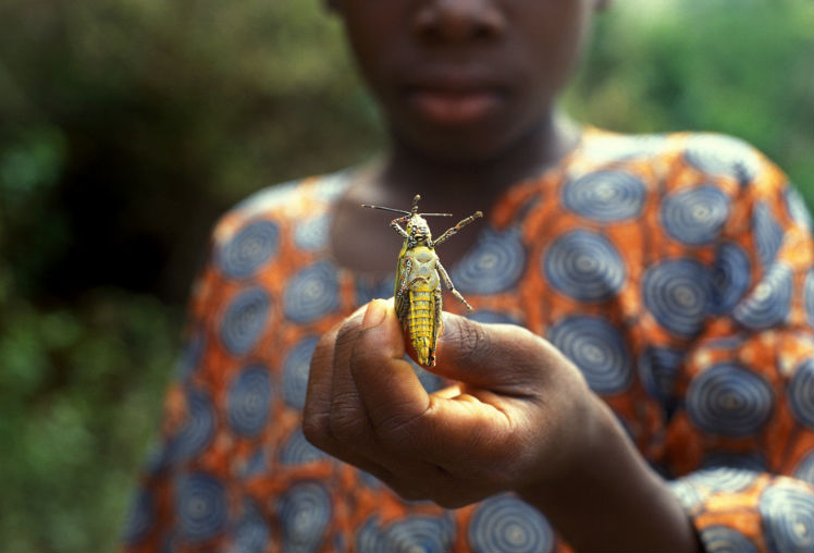 A boy holds a locust in the town of Kloto