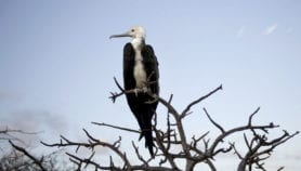 Rare animals vital for ecosystem life support