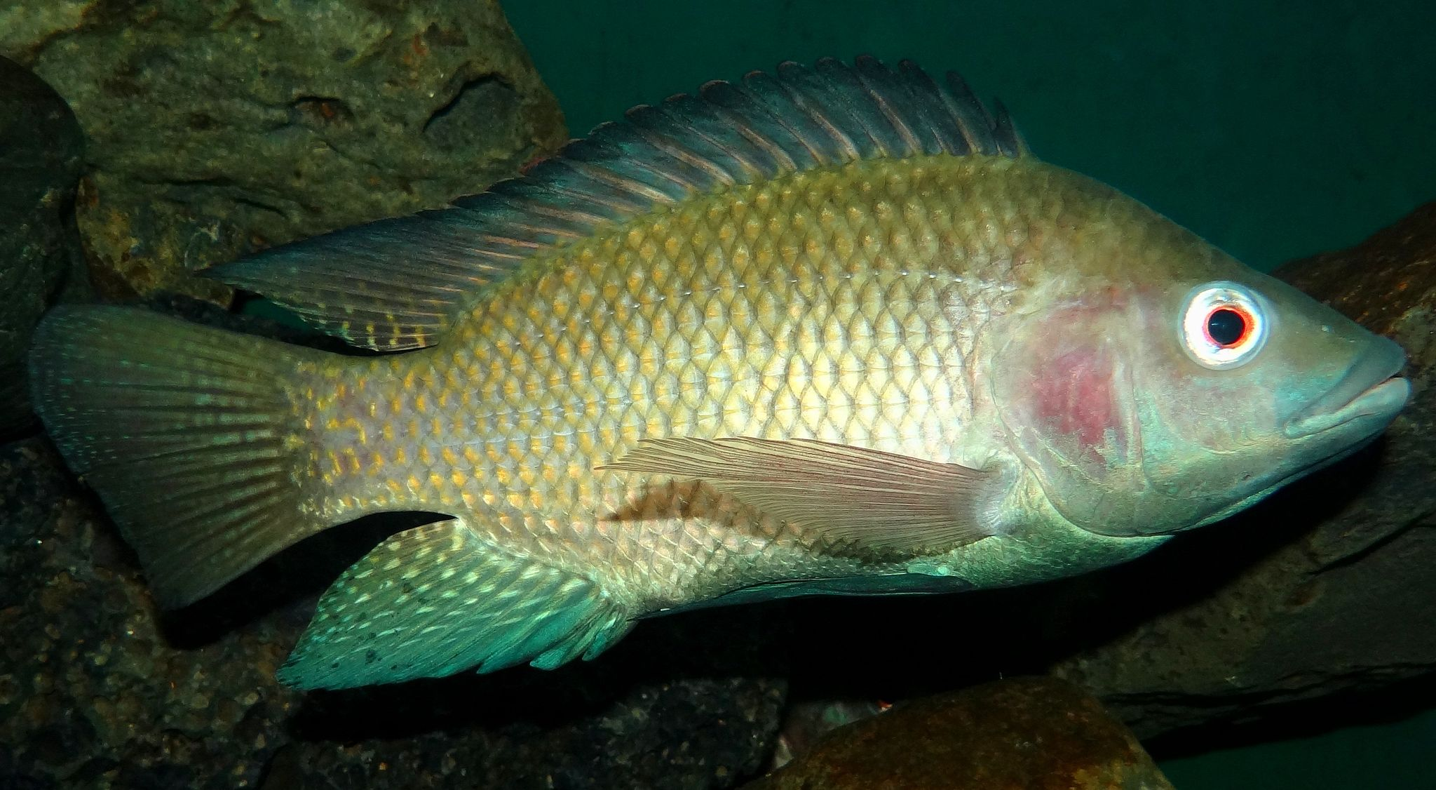 New diseases threaten aquaculture