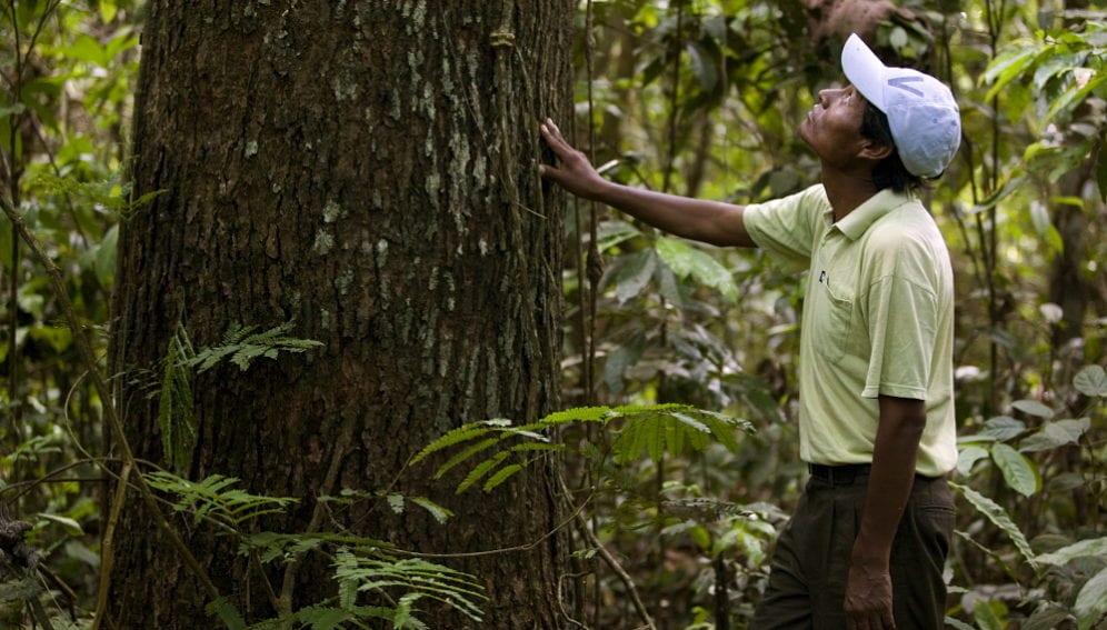 Amazon deforestation.jpg