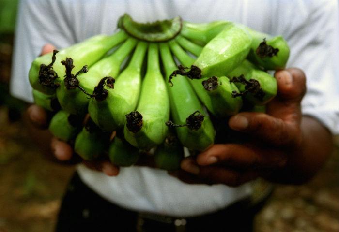 bananas climate change.jpg