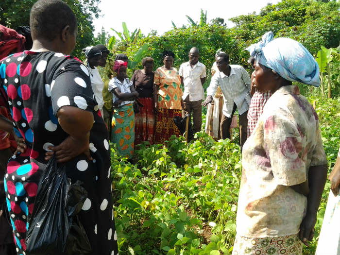Science meets farming to reveal Africa's best bean