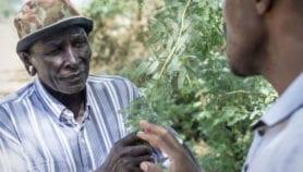 Alien plants turn East Africa into 'green desert'