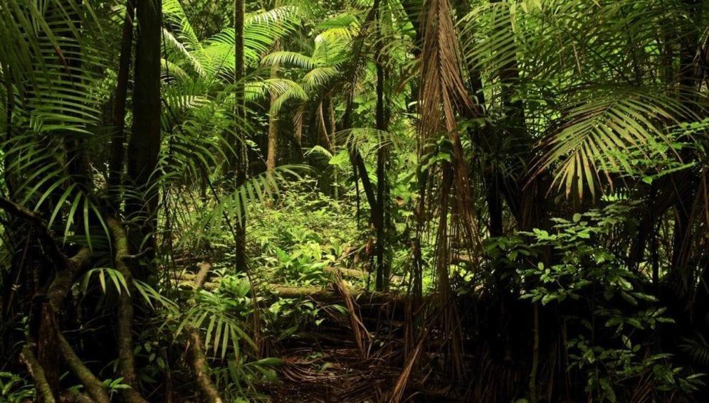 bosque amazonia-PIPONIOT ET AL.-eLIFE