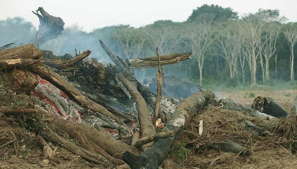 Deforestation in Amazon - Main