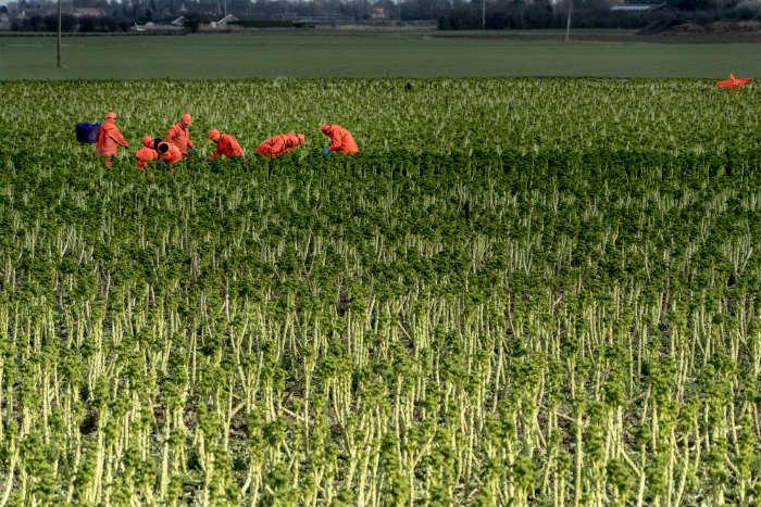 CABI agri.jpg